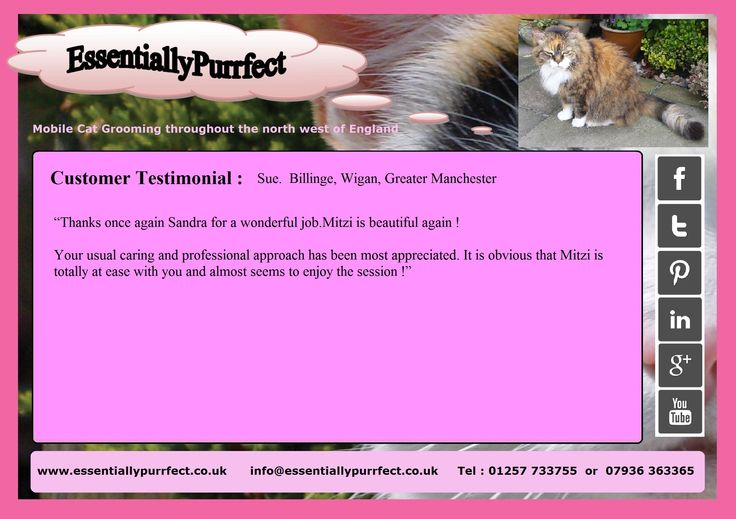 Customer Testimonial of EssentiallyPurrfect  #mobile #cat #catgrooming service. Sue #Wigan #Manchester