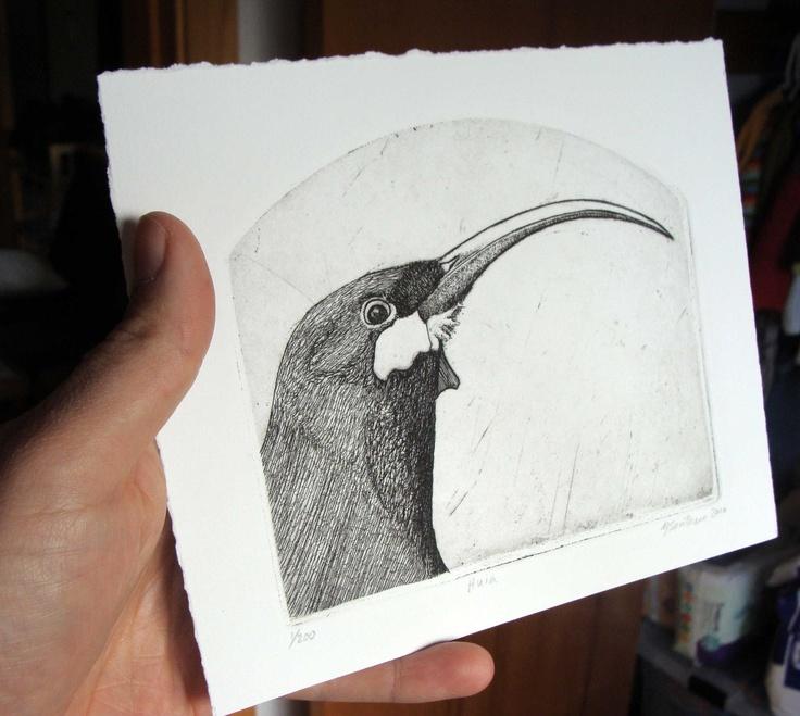 Huia etching