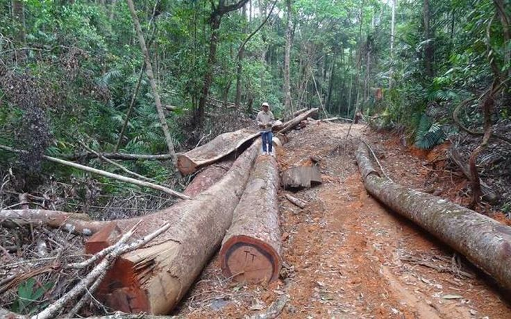 Leaked WWF report: illegal logging in Laos 'a worst-case scenario' - The Ecologist