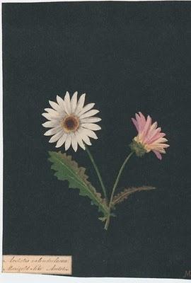 Mary Delany's botanical paper mosaics.