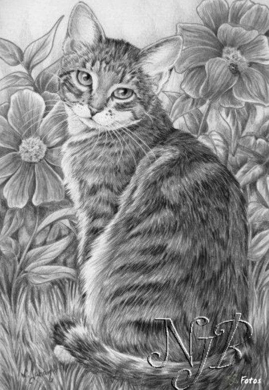real life cute kittens coloring pages | Coloring for adults - Kleuren voor volwassenen | Cat ...