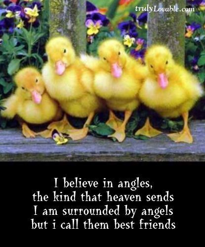 Baby Chicks Quote easter maxine easter quotes easter images easter quote happy easter happy easter. easter pictures funny easter quotes happy easter quotes quotes for easter