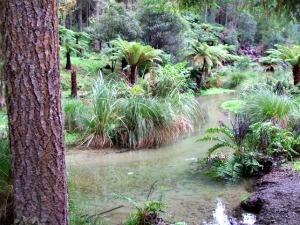 A secret Rotorua Walk - The Ponga Track located near Hill Rd.