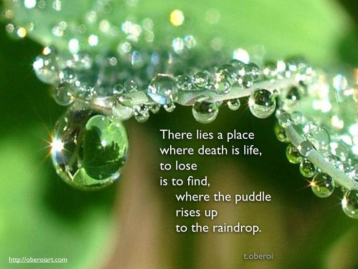 "One of my newest poems: ""There lies a place where death is life, to lose is to find, where the puddle rises up to the raindrop"" Please feel free to share it or leave a comment. My photographs and poems can be seen on my website, oberoiart.com"