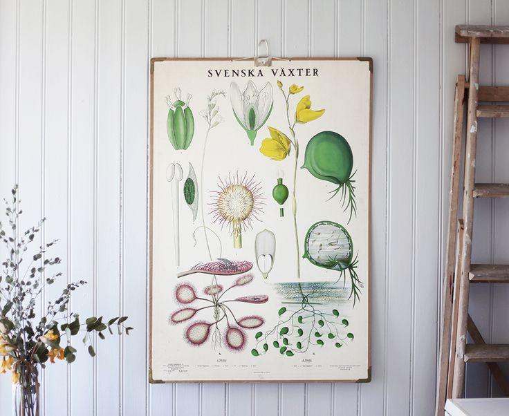 inredning, vintage decor, skolplansch, poster, torp, summerhouse, Gotland | Emmas Vintage | Page 2