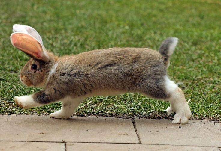 Прикольные картинки кроликов зайцев нет