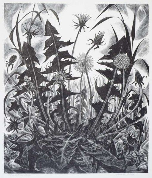 'Dandelion' by Monica Poole (wood engraving)