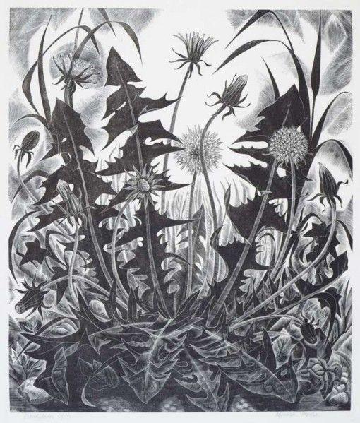 'Dandelion' by Monica Poole (wood engraving)