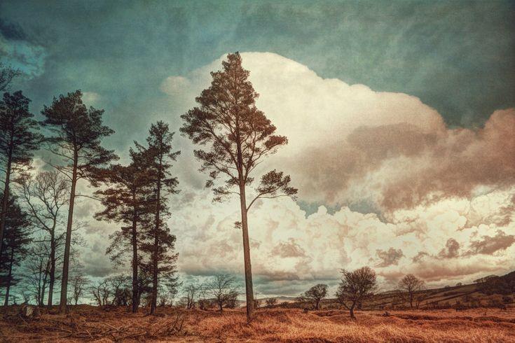 Walking Dartmoor