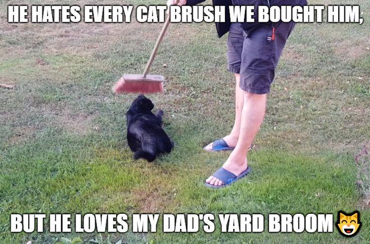 Lustige Katzen Meme des Tages – 32 Bilder #catmemes #funnycats #funnymem …   – ~tiere~
