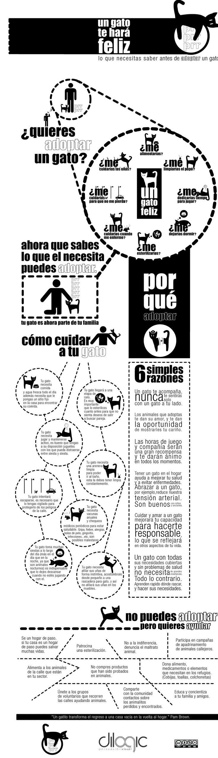 Adopción responsable de gatos #infografia #infographic