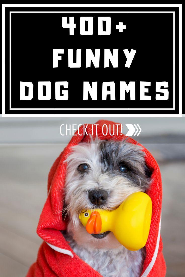 funny dog names - 735×1102