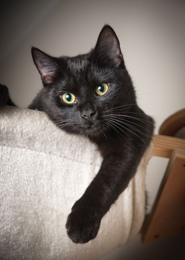 Sundays With Tabs The Cat Makeup And Beauty Blog Mascot Vol 341 Cats Black Cat Cat Care