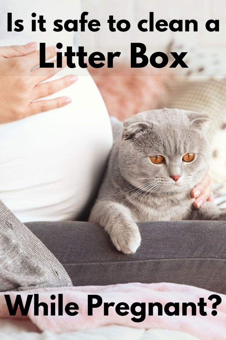 Is It Safe To Clean A Litter Box While Pregnant Article By Litter Boxes Com Litterboxes Tcs Thecatsite Cat Cats Kitten Cat Illnesses Cat Care Litter Box