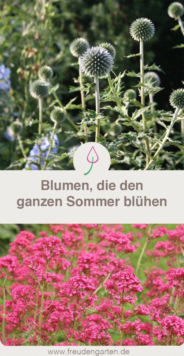 Fabelhaft Die schönsten Dauerblüher | Garten | Dauerblüher, Garten und @MD_07