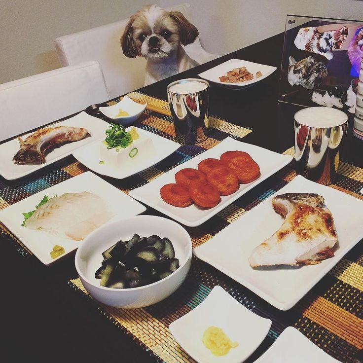 今夜の貴族の晩餐は鰤かま塩焼きとヒラメ刺身とさつま揚げと茄子の浅漬けと冷奴をヤラカシたよ( ) ではでは( ω)( ω)かんぱーい #貴族の晩餐 #シーズー #愛犬まゆげ by mayuge0807