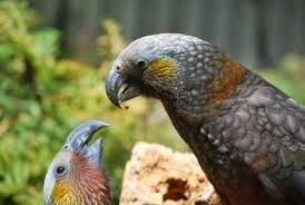 Image result for NZ native creatures