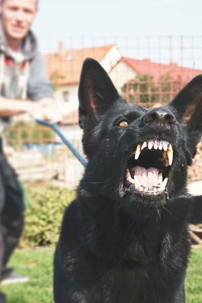 How To Train Your Dog To Stop Barking At Visitors Dogs Dog