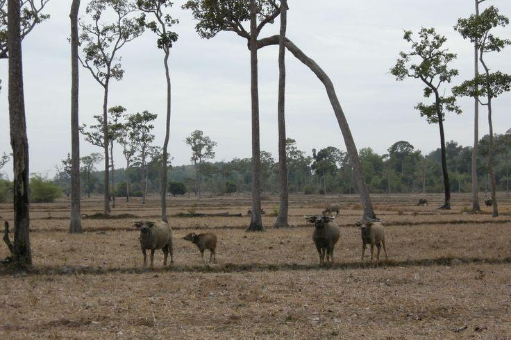 Ein Teil des Cat Tien Nationalparks - #AsiaticaReisen
