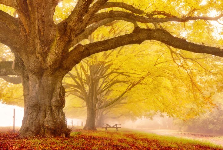 The Yellow Monster || MOUNT WILSON || BLUE MOUNTAINS by Rhys Pope on 500px