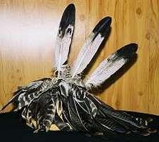 62 best native american headdress images on pinterest