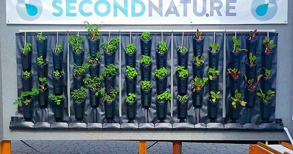 Liked on Pinterest: Check out our low-cost food-producing #greenwall at the LA County Fair! Two free tickets to the first four people to DM me! #aquaponics #verticalfarming #urbanfarm #hydro #savewater #herbs #vegetables #strawberries #farm #Verticalgarden #garden #fairplex #Growyourown by secondnatureaquaponics
