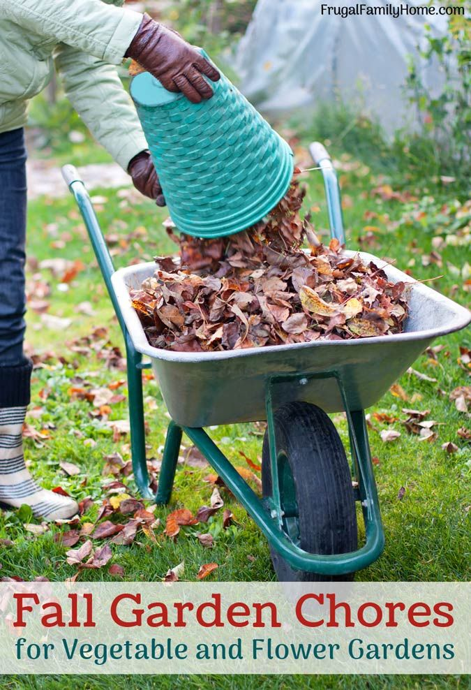 Top Fall Garden Chores to do before winter comes. Now is a great time to clean up your garden beds and flower beds to get them ready for winter. Doing fall garden chores can make gardening in the spring so much easier. Make sure to get these tasks done.