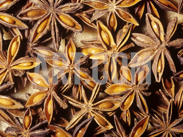 Whole Dried Seed Pods of Star Anise (Illicium Verum ...