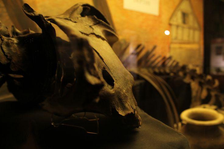 Skeleton Project #bones #skeleton #fossil