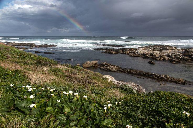 Rainbow, sea, rocks and arum lilies at Schoenmakerskop close to Port Elizabeth, South Africa. Photograph by Luc Hosten, Frineds of Schoenmakerskop 21 August 2016