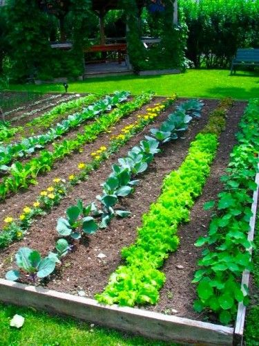 How to layout a Backyard Vegetable Garden. My dream garden :)