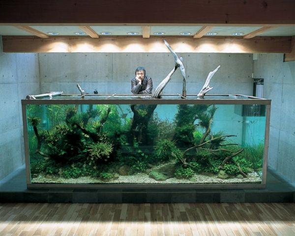 winter garden ideas waterlife mehr - Freshwater Aquarium Design Ideas