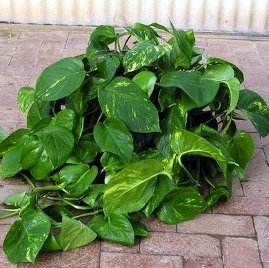 222ff2eb1d4cca41a2394e3e5cbc71de--porch-plants-potted-plants