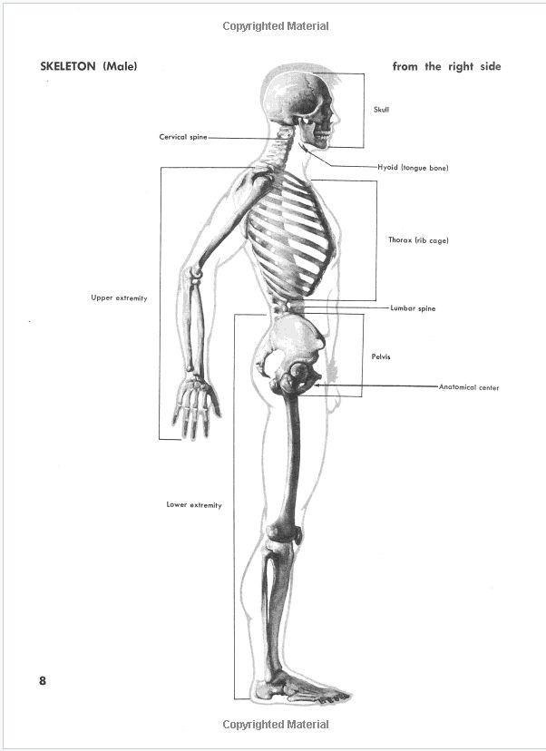 75 besten Anatomy Bilder auf Pinterest | Anatomie, Menschliche ...