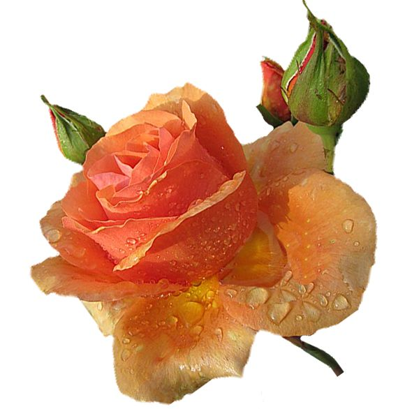 Orchideák,Szép virág,Egy rózsaszál,Cserepes virágok,Rózsacsokor,Fehér tulipán,Krizantén,Narancsszínű,Rózsaszínes,Piros fehér, - tripike Blogja - 3D animációk 01.,3D animációk 02.,3D animációk 03.,3D animációk 04.,3D animációk 05.,3D animációk 06.,3D animációk 07.,3D animációk 08.,3D animációk 09.,3D animációk 10.,3D animációk 11.,3D animációk 12.,3D animációk 13.,3D animációk 14.,3D JPG,Alkalmi ruhák 1.,Állatok 1.,Állatok 2.,Állatok 3.,Animációk 1.,Animációk 2.,Animációk 3.,Animációk…
