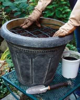 How to Plant Tulips in Pots | Fine Gardening