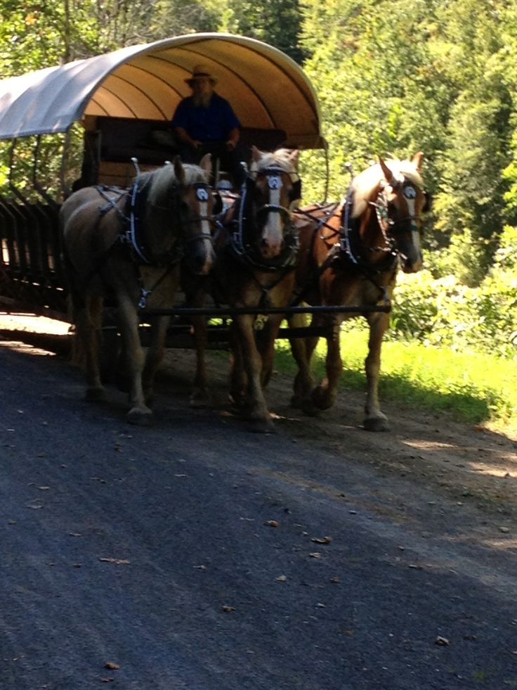 Grand Canyon Pa Directions%0A Horse and covered wagon ride on the bottom of the of Pennsylvania Grand  Canyon