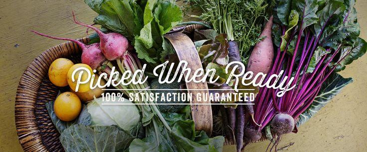 Evi Teslim yerel Texas çiftçi, çiftlik ve esnaf yüksek kaliteli, sürdürülebilir üretilen gıda ile Austin ve Houston hizmet vermektedir.