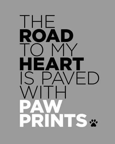 The Road to my heart is paved with paw prints #heart #dogquote #puppylove !