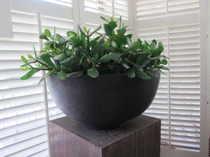 Schaal gevuld met crassula vetplantjes for Huis inrichten op schaal