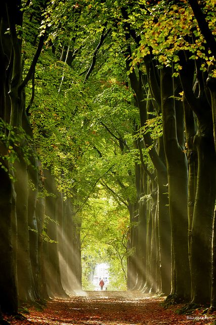 Autumn lights, Groningen, The Netherlands (by reintjedevos).  Wow, it's like a fairy tale.