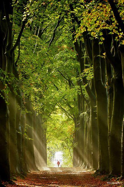 Autumn lights, Groningen, The Netherlands.