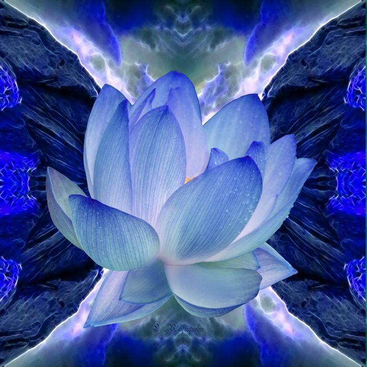 Blue Lotus flower - Laureenr