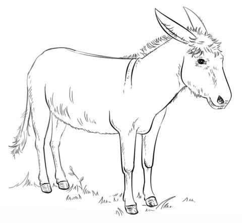 21 best images about bible balaam donkey on pinterest for Donkey coloring pages free