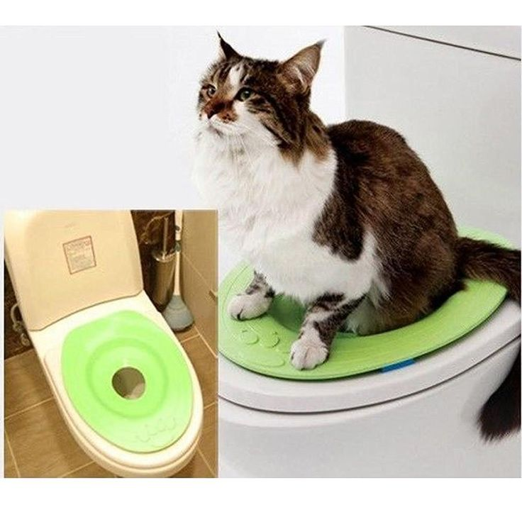 Best Toilet Training Seat For Cats