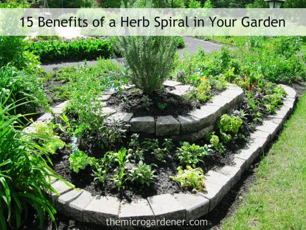 Large long herb spiral with dry microclimate at the top and a moist zone at the bottom. | The Micro Gardener