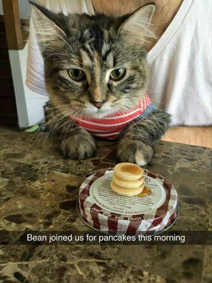 cat eating tiny pancakes Cute animals, Cute funny
