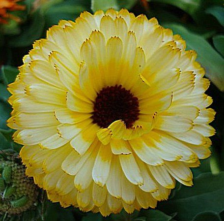 24 best just flowers images on pinterest nature beautiful flowers yellow flower mightylinksfo