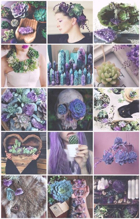 Succulents Witch