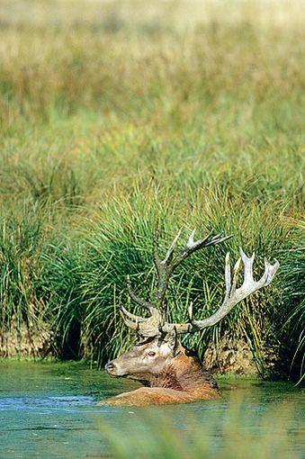 Od jelienka k šestnástorákovi - Časopis Poľovníctvo a rybárstvo